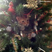 Archie in the Tree
