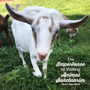 The Importance of Visiting Animal Sanctuaries