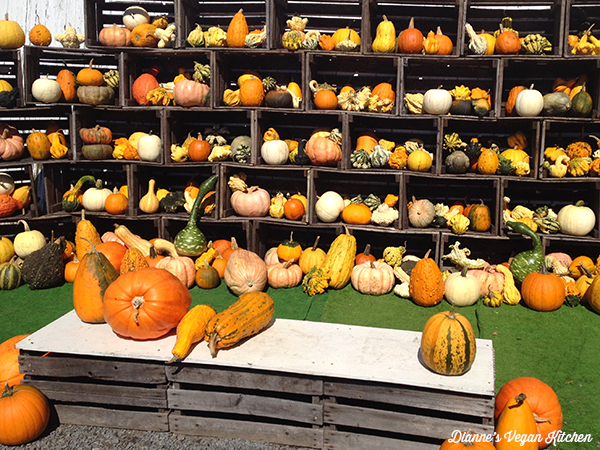 display of gourds and squash